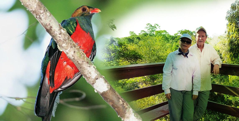 Deslumbre A Beleza Das Aves Do Rio Roosevelt